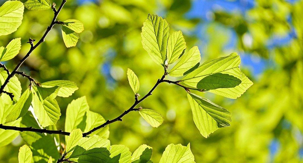 Confirmado, estudio revela que las plantas sienten dolor