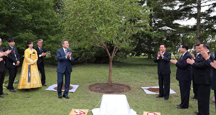El presidente de Corea del Sur, Moon Jae-in, plantó en Pyongyang un árbol en memoria de su visita a la capital norcoreana