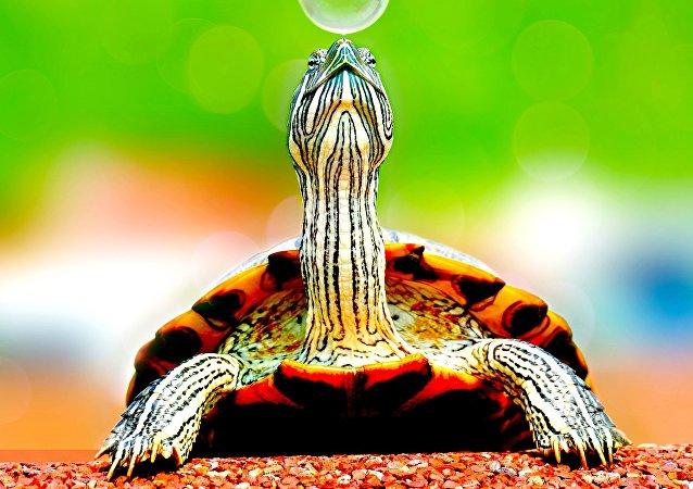Una tortuga, imagen referencial