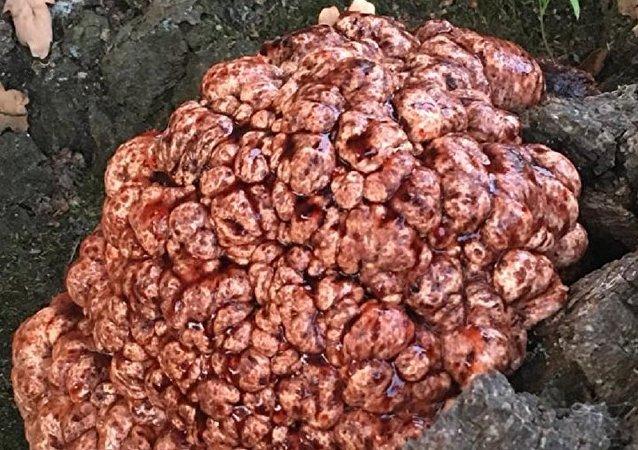 Un árbol con un 'cerebro sangrante'