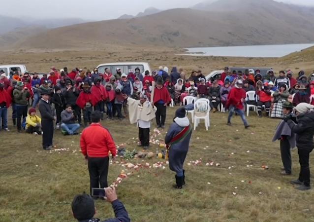 Suicidio masivo de pájaros en un lago ecuatoriano