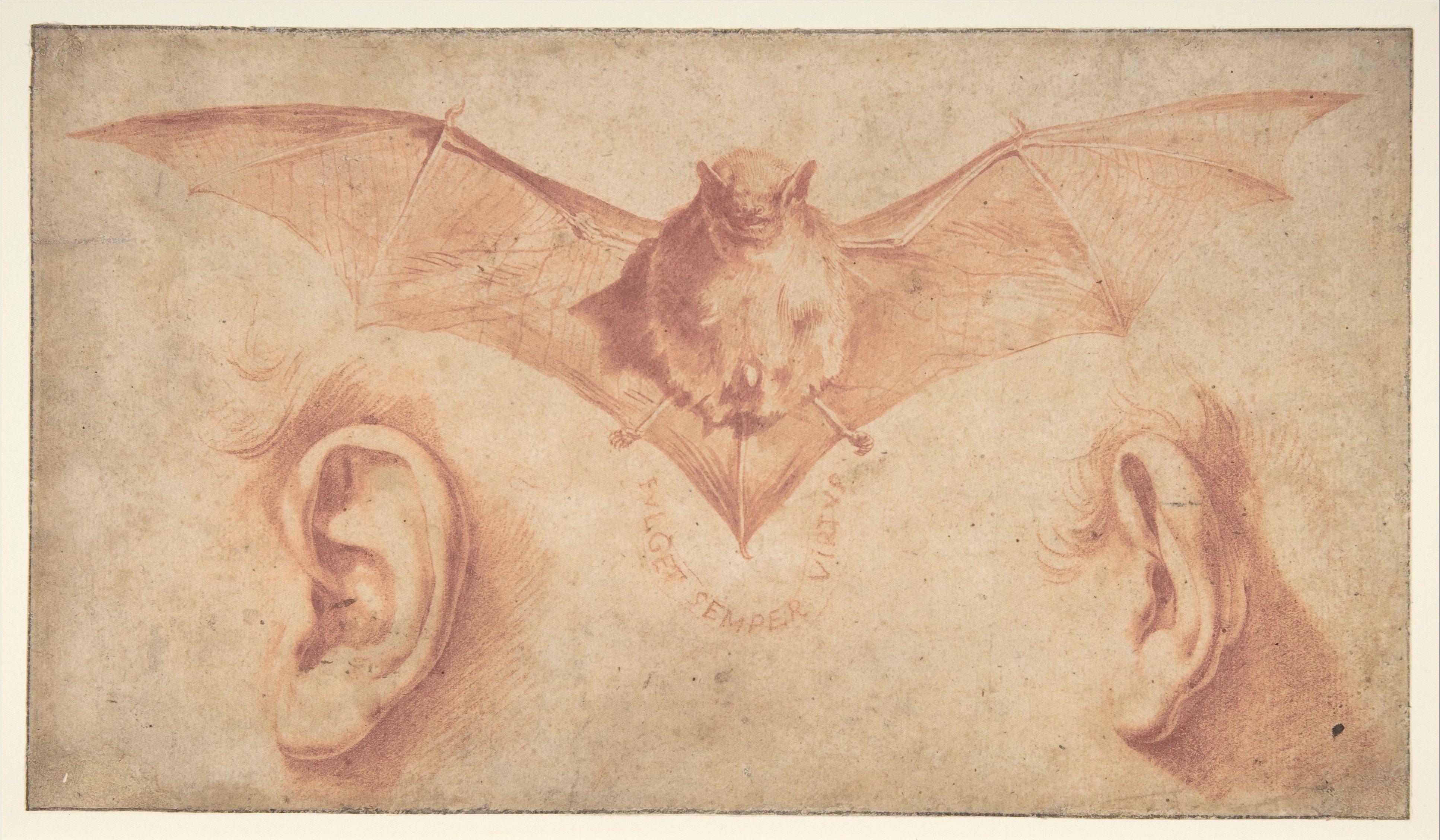 Un murciélago y dos orejas