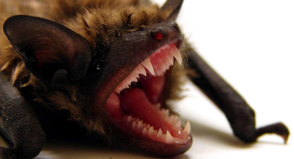 Un murciélago