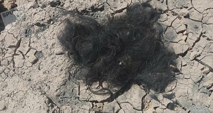 Restos de las barbas que se cortaron los terroristas al huir