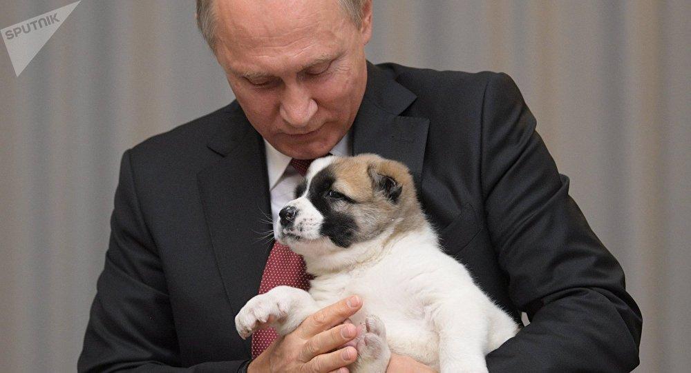 Vladímir Putin con un cachorro