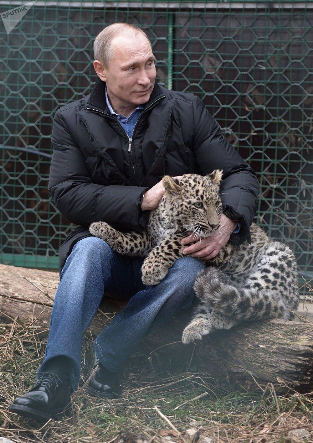 Vladímir Putin con un cachorro de leopardo (2014)
