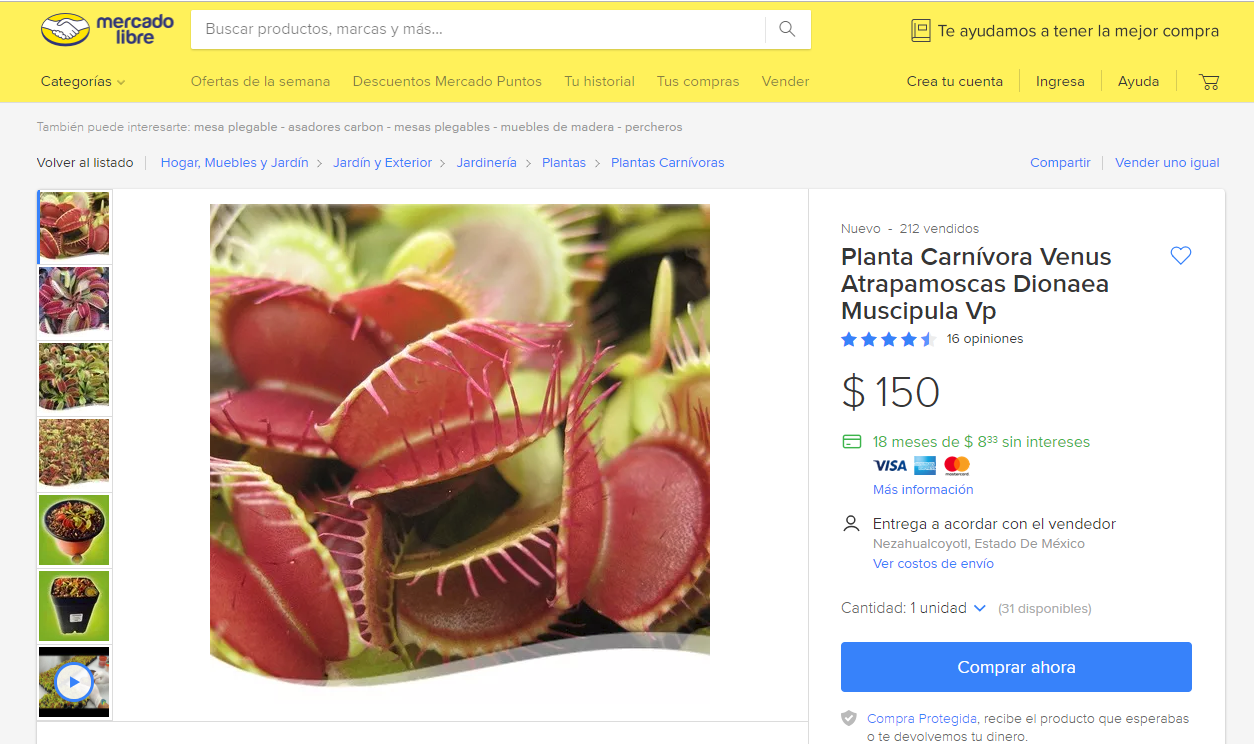 Planta atrapamoscas en venta en Mercado Libre México
