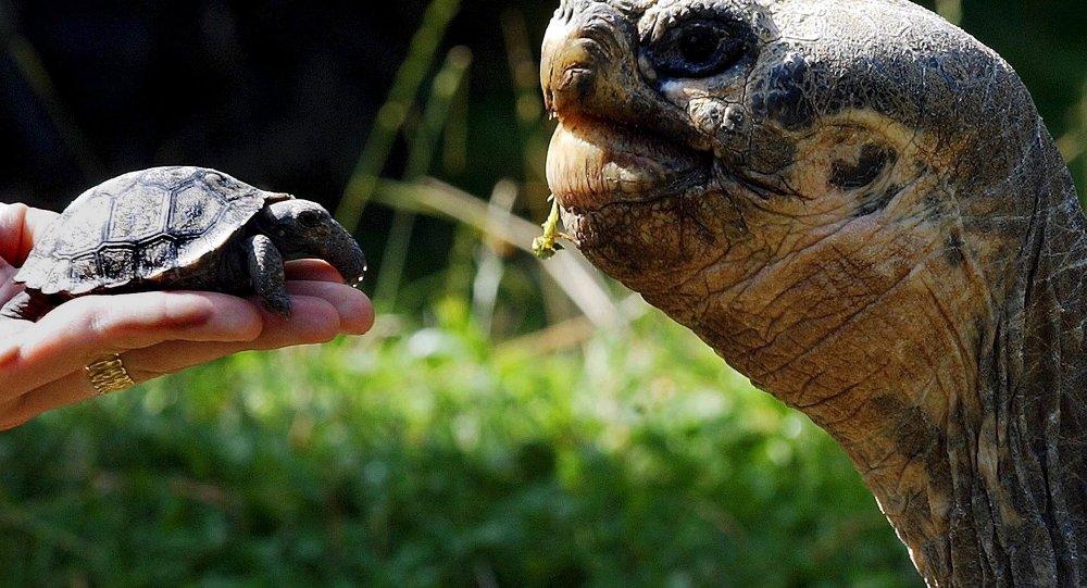 Tortugas en Galápagos
