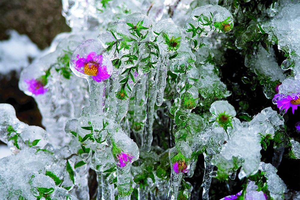 La imagen 'Las flores de cristal', de Daniella Pomázova, fue tomada en el pueblo de Fédorovka, situado en la región de Tver.
