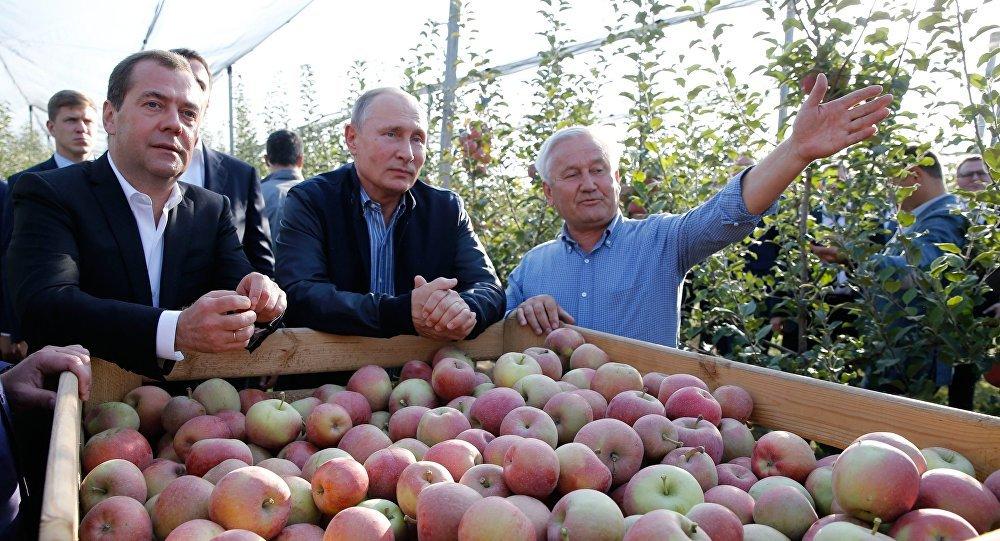 El presidente de Rusia, Vladímir Putin y el primer ministro, Dmitry Medvedev durante una inspección agrícola