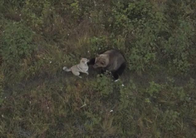 Amistad animal: una familia de osos salvajes adopta a un perro