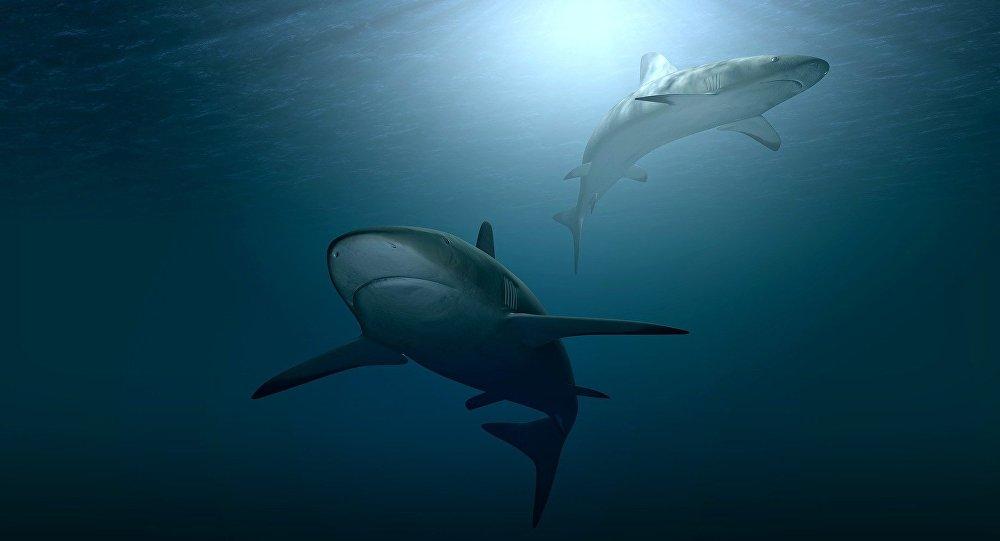 Dos tiburones