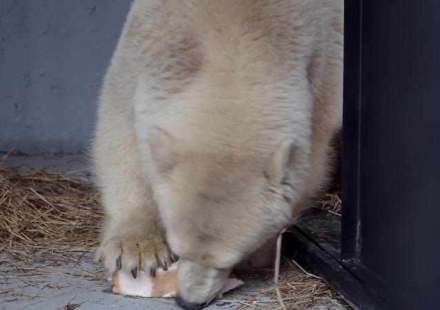 Un 'Winnie Pooh' blanco llega a su nueva casa en Krasnoyarsk