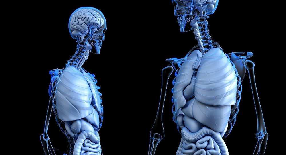 Medicina (anatomía) (imagen referencial)