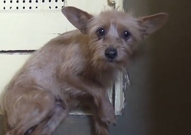 Conoce la conmovedora historia de salvación de la perra Holly