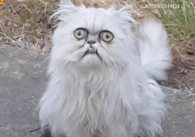 ¿Sabes poner la misma cara que este gato?