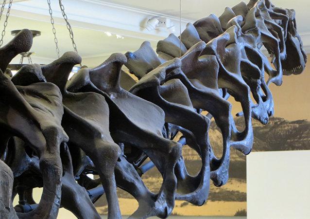Restos del dinosaurio del grupo de los saurópodos (Archivo)