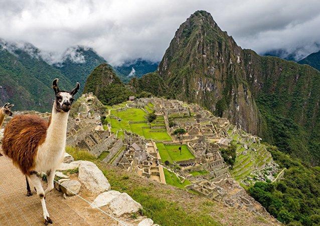 Una llama en Machu Picchu