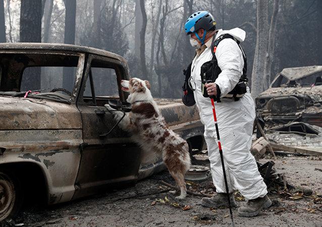 Búsqueda de los desaparecidos por incendios en California