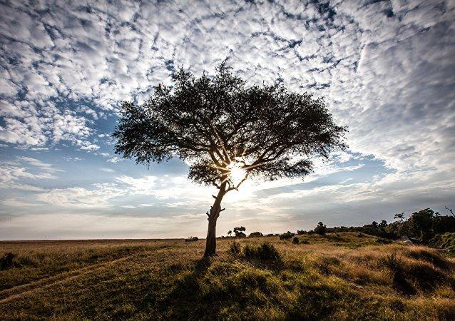 Reserva nacional Masai Mara en Kenia