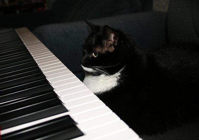 Un gato sobre el piano (imagen referencial)