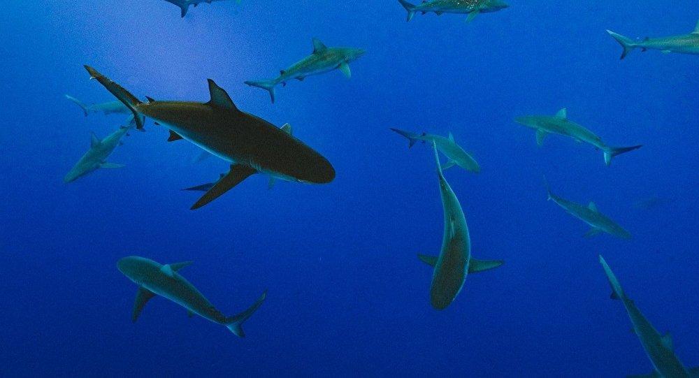 Tiburones, imagen referencial