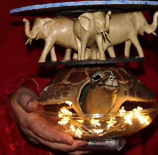 Un juguete simbolizando la Tierra Plana con una tortuga y tres elefantes encima