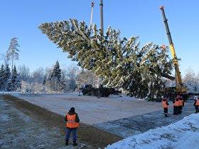 ¿Cómo se tala el árbol de Navidad más importante de Rusia?