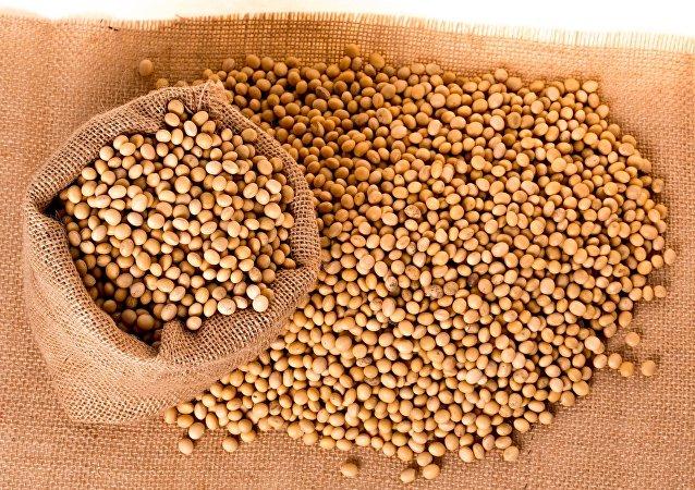 Las semillas de soja