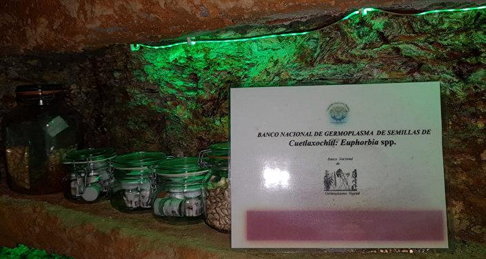 Banco Nacional de Germoplasma de semillas de Cuetlaxóchitl (flor de Nochebuena)
