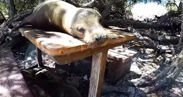 ¡Déjame en paz! Un enojado león marino frustra el picnic de unos turistas en las Galápagos