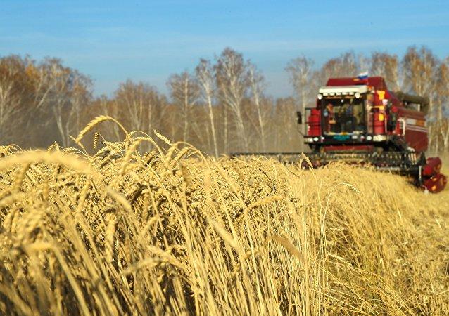 Cereales en Rusia