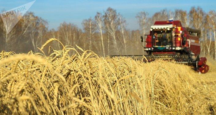Cereales en Rusia (archivo)