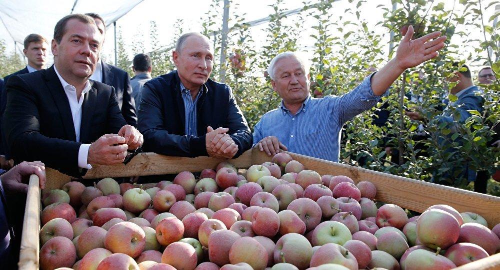 El presidente ruso, Vladímir Putin, y el primer ministro, Dmitri Medvédev, inspeccionan huertos de manzanas de la empresa agrícola Rassvet en la región de Stávropol en octubre de 2018