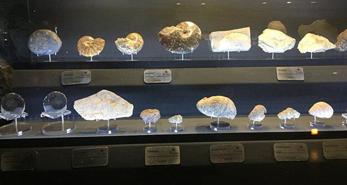 Piedras y fósiles en el museo de Las Rocas y Fósiles en Zacatecas, México