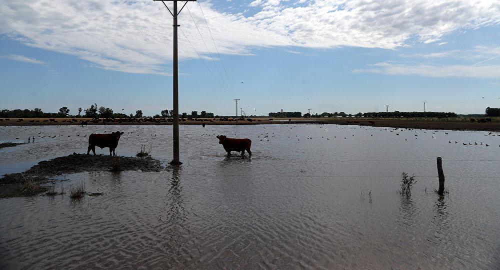 Resultado de imagen para imagenes del campo con animales inundados