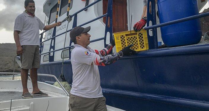 Embarque de las iguanas Conolophus subcristatus a Isla Santiago, en  Islas Galápagos