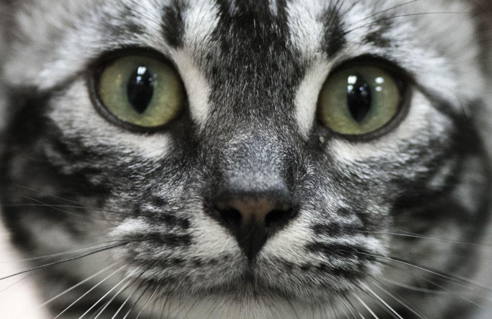 Tormentas de arena, gatos y bellezas: estas son las imágenes de la semana