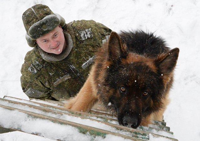 Entrenamineto de los perros militares (archivo)