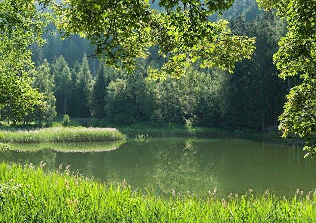 Un bosque en Austria, referencial