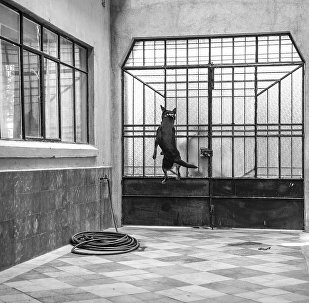 El Borras, el perro de la película Roma de Alfonso Cuarón