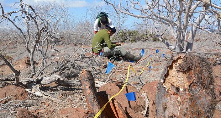 Señalización para la colocación del cebo para la erradicación de roedores en la isla Seymour Norte