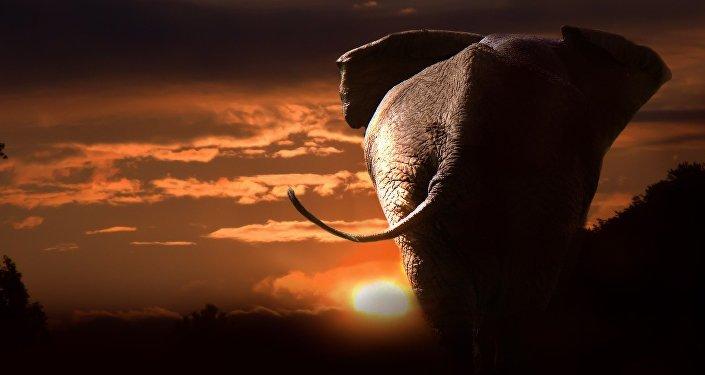 Silueta de un elefante