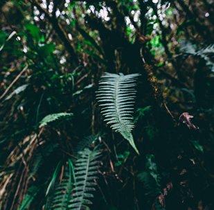 Bosque de Amazonía (imagen referencial)