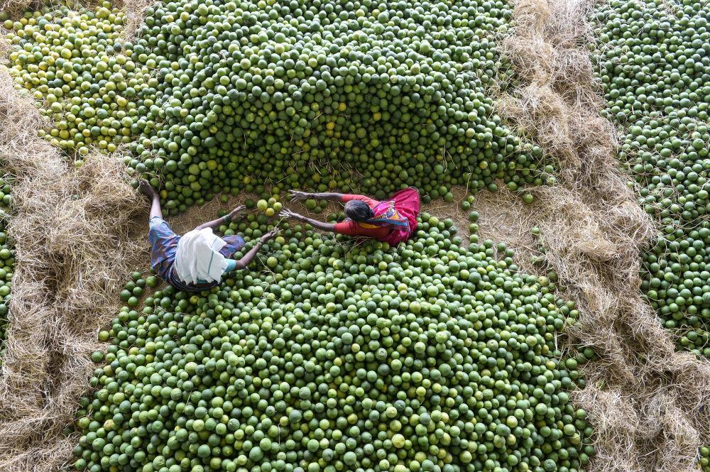 Trabajadores indios escogiendo frutas en un mercado cerca de Hyderabad.