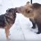 La tierna amistad entre un oso y un perro