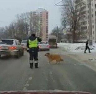 Un policía ayuda a un perro