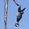 Una pitón constriñe a un cuervo desde un poste de luz (fuertes imágenes)