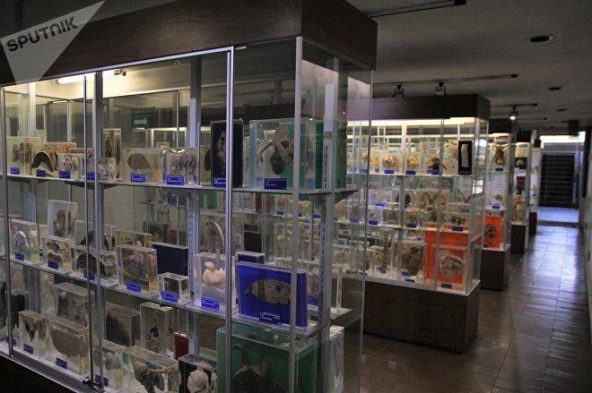 Museo de patologías en la Facultad de Medicina Veterinaria y Zootecnia de la UNAM,