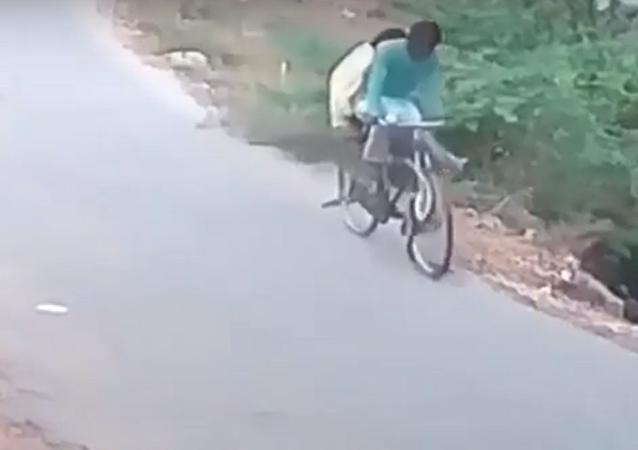 Una serpiente se lanza contra una bicicleta en la India